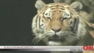deadly tiger attack at zoo