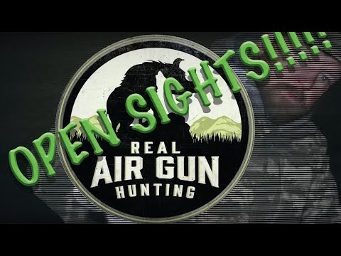 Real Airgun Hunting Rabbit No Scope! Montana Walther Parrus Air Rifle