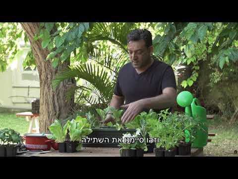 איך שותלים גינת ירק בבית?