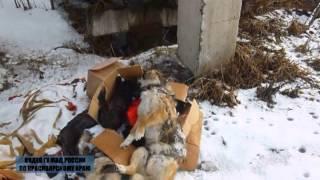 Обнаружены трупы животных