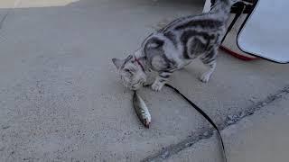 살아있는 진짜 물고기를 보고 고양이 풍자가 한 행동은?…