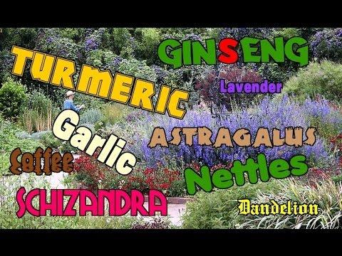 Herbalism Tips for Beginners ~ Health Minute Protip #512