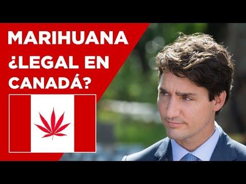 ❗️Canadá legalizará el consumo de marihuana desde 2018 - Noticias de Canadá