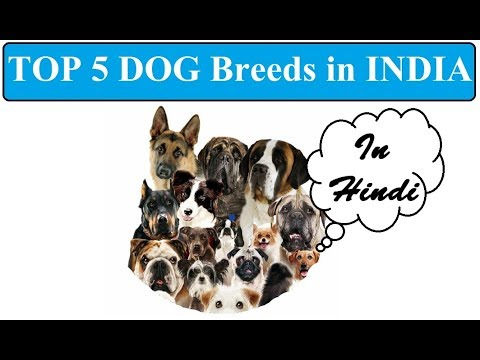 Top 5 Dog Breeds In India in Hindi |  Dog Facts In Hindi | Animal Channel Hindi