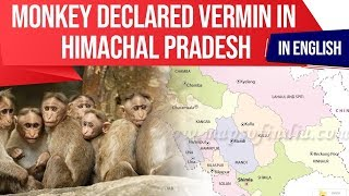 Himachal Pradesh declares Monkeys as Vermins, Is it ethical to CULL an animal? Current Affairs 2019
