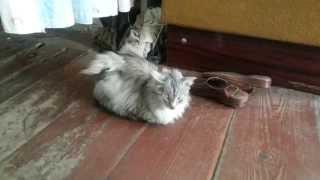 Кот с крыльями.