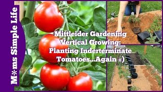 Mittleider Gardening Vertical Growing: Planting Indeterminate Tomatoes...Again =)