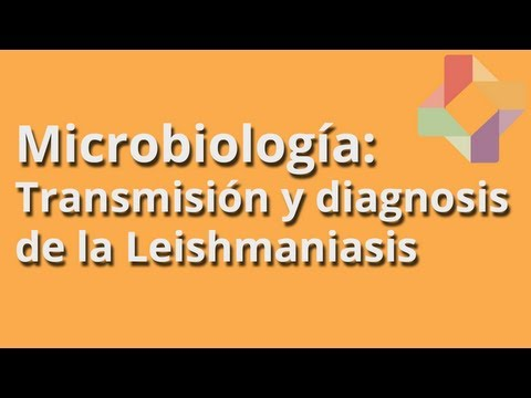 Transmisión y diagnosis de la Leishmaniasis - Microbiología - Educatina