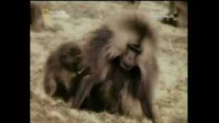 สารคดีสัตว์ผสมพันธุ์ p4 จบ