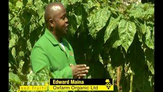Vidokezo vya mtaalam wa upandaji wa Tunda la damu (Tree tomato) - Part 1