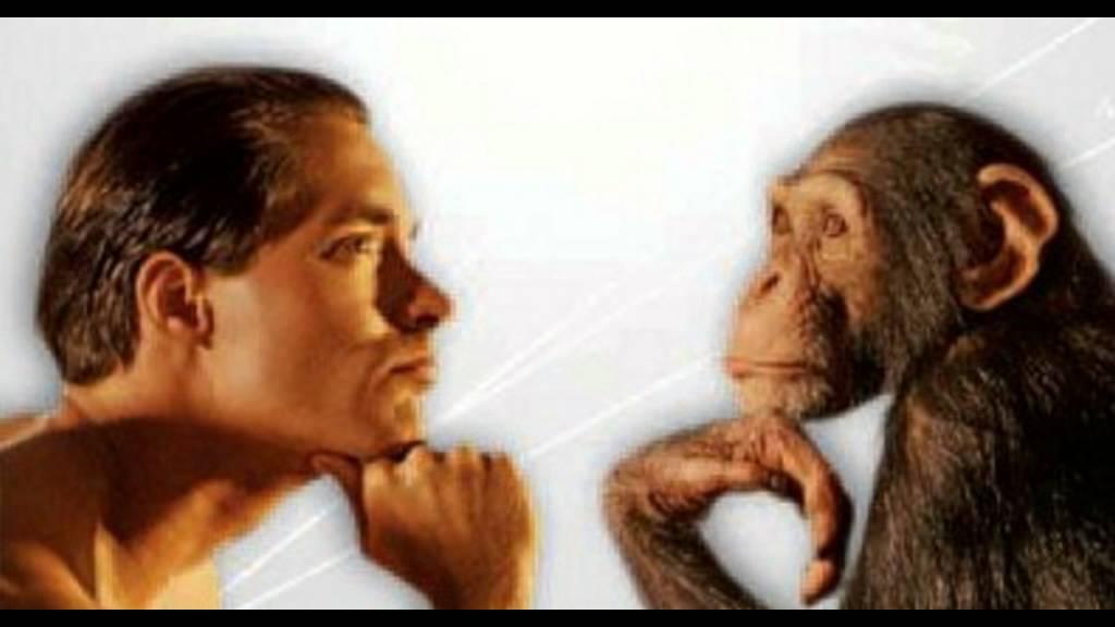 Matrimonio Tra Uomo E Animale : La differenza secondo me tra uomo e animale anche se siamo