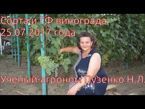 Сорта винограда созревающие на 25 07 2017 (Пузенко Н.Л.)