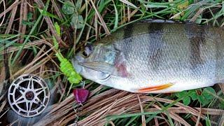 Дневник рыболова Ловля щук и окуней Коломак 01 11 20