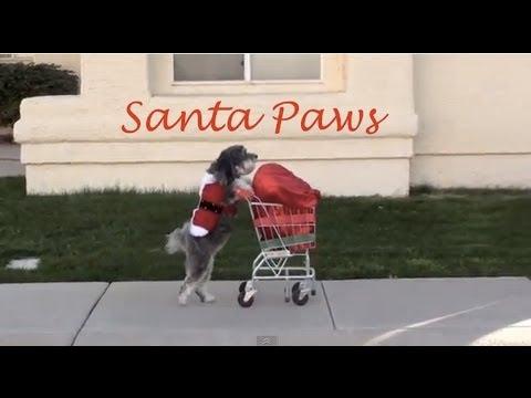 Dog Saves Christmas SANTA PAWS