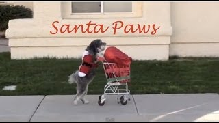 Dog Saves Christmas- SANTA PAWS