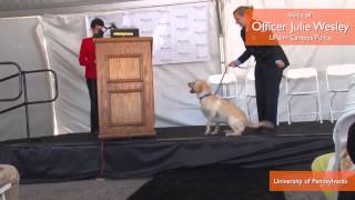 Upenn Graduates First Class Of Working Dogs, Only One Has Job