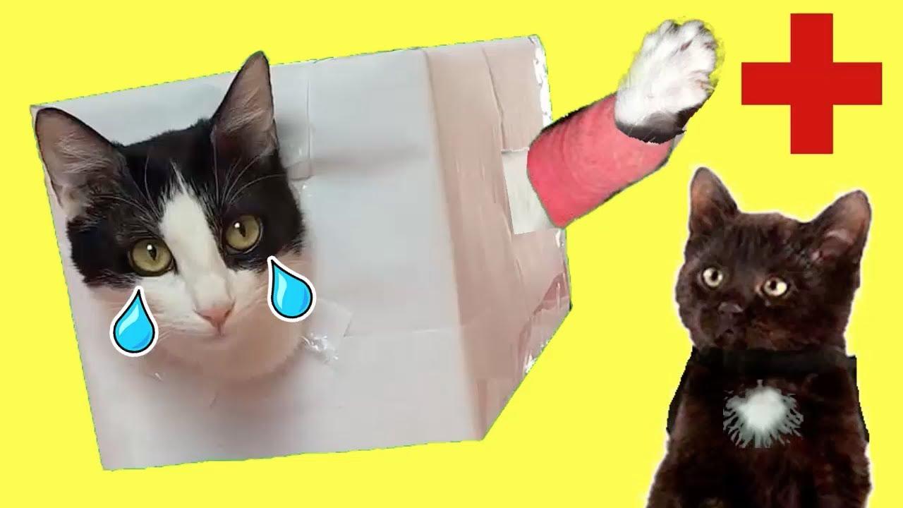Mis gatos graciosos Luna y Estrella escondidas en casa no quieren ir al doctor / Videos de gatitos