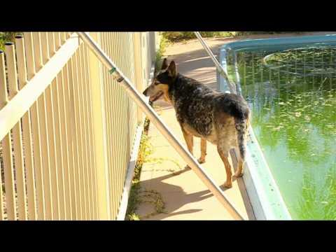 Outback Wildlife Rescue Episode 7