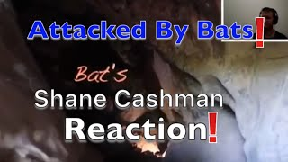 Attacked by Bats in a Cave Reaction