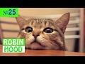ПРИКОЛЫ 2017 с животными. Смешные Коты, Собаки, Попугаи // Funny Dogs Cats Compilation. Февраль №25