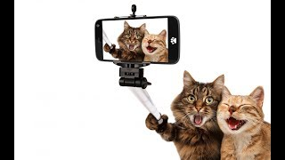 Baby Cats - Funny and Cute Baby Cat Videos Compilation - قطط صغيرة مضحكة