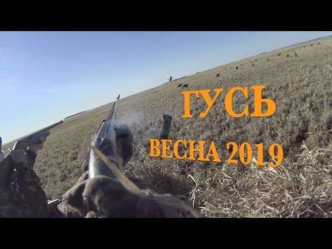 Охота на гуся.Весна 2019. Пойма оби