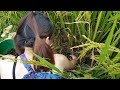 VN Daily - Amazing beautiful girl and boy catch snail field in rice field - Catch the snail