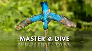 Kingfisher: Death from Above