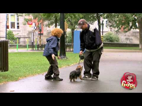 Stealing Cute Puppies Prank