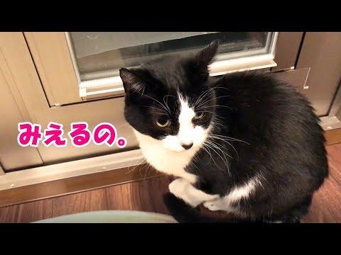 おしゃべり猫、自宅警備で「見えるー!」を連呼