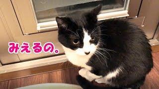 おしゃべり猫、自宅警備で「見えるー!」を連呼 thumbnail