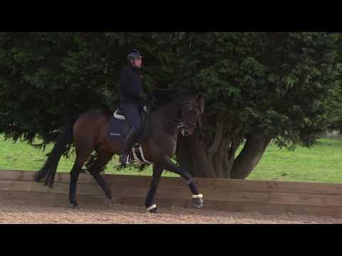 How To Develop Medium Trot | Collective Equestrian | Jonny Clarke West