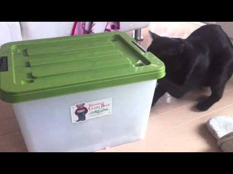 Smart Cat  #2  賢すぎるねこ