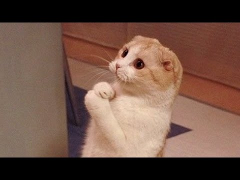 Cats are so funny you will die laughing - Funny cat compilation from YouTube · Duration:  10 minutes 6 seconds