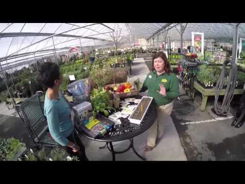 Growing Edible Plants With Gurvir Dhindsa & Pike Nurseries