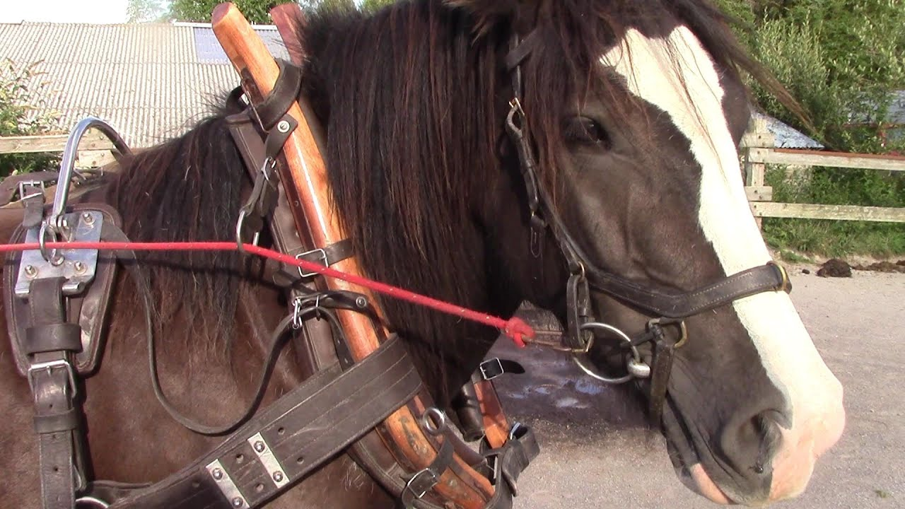 Clean Leather Horse Harness - YouTube