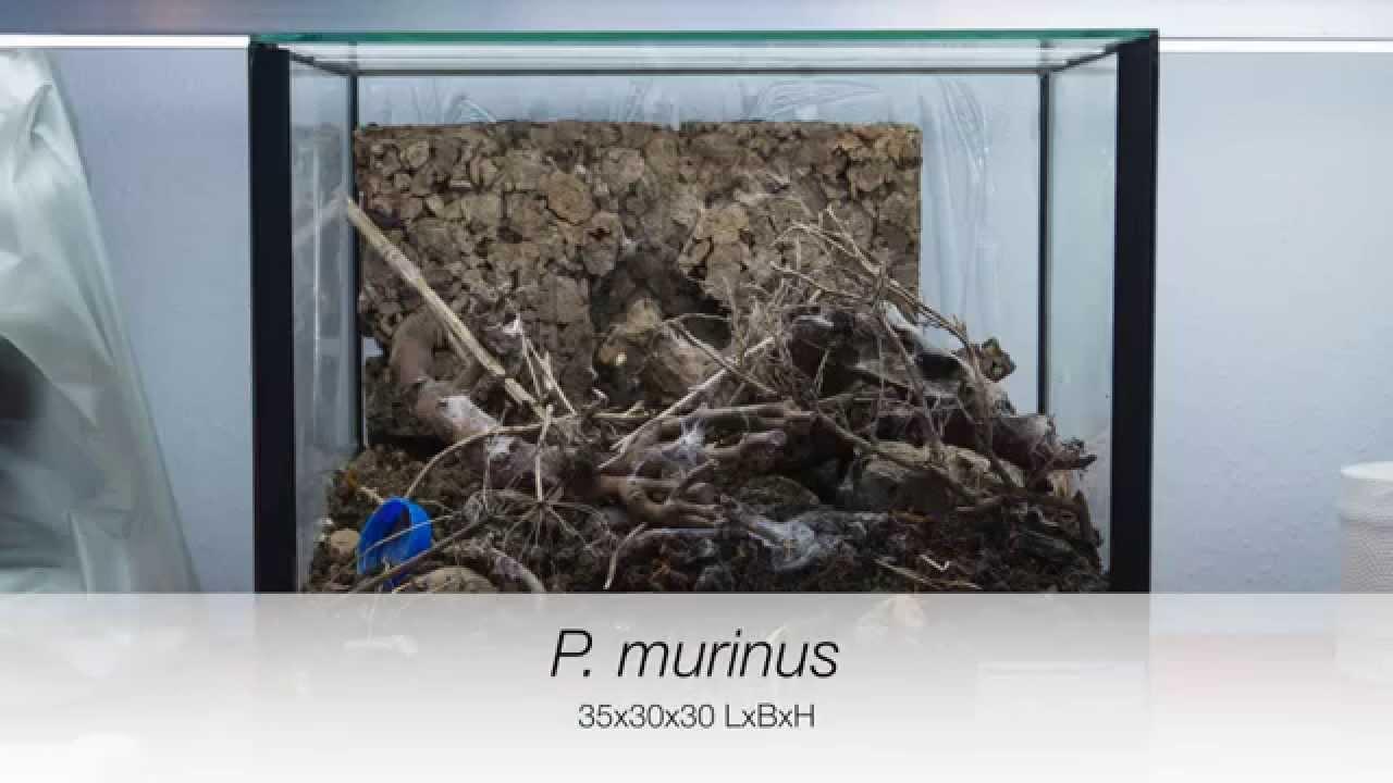 Terrarium einrichten für eine Vogelspinne [4K] YouTube ~ 07123836_Sukkulenten Terrarium Einrichten