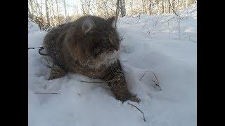 Зимняя фотосессия красавца кота