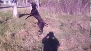 Найдена собака в д Вильча Глусского района