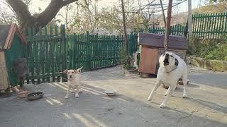Собаки на входе в частный двор