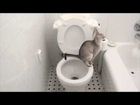 Just PERFECT, A Cat Using a Toilet, A Toilet Flushing Automatically.