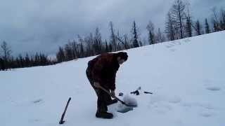 Рыбалка на Севере.Море хариуса крупного на зимней рыбалке.18.04.2015