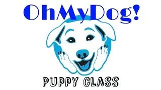 Ohmydog! Dog Training School: Puppy Class!
