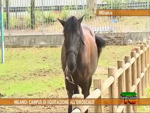 Milano: campus di equitazione all'Idroscalo