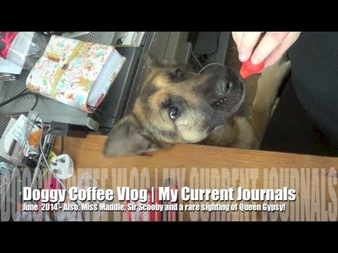 Doggy Coffee Vlog| My Current Journals