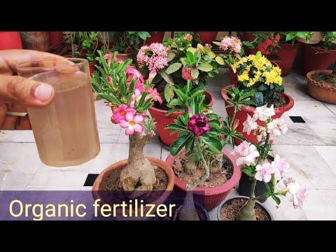 Best fertilizer for adenium plant, how