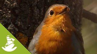 Bird mum