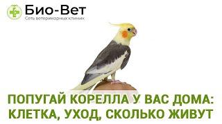 Попугай корелла у вас дома: клетка, уход, сколько живут. Ветеринарная клиника Био-Вет.