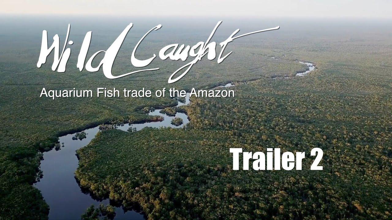 Wild Caught: Aquarium fish trade of the Amazon