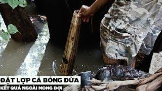 Đặt lợp bắt cá bóng dừa   Hương Vị Miền Tây